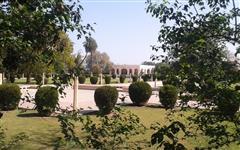 Image of Kamran Baradari