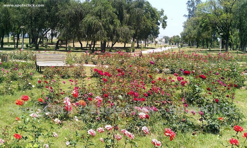 Rose & Jasmine Garden Gallery