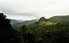 Image of Sonaulim