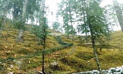 Pics of Shimla Hill