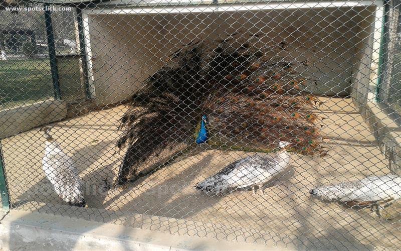 Bahawalpur Zoo Photo