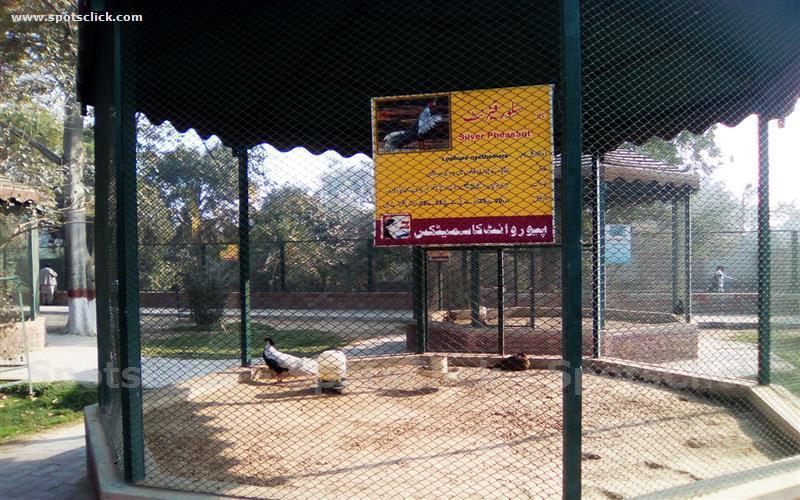 Gallery of Bahawalpur Zoo