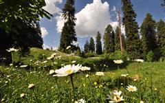 Pics of Nathia Gali