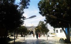 Image of Hala