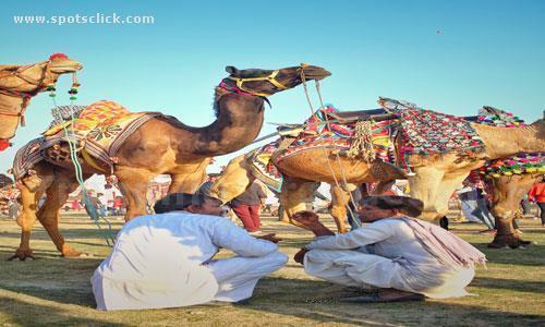 camel-market-karachi.jpg