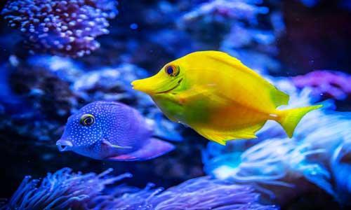 family-beach-fishes.jpg