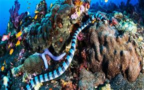 Image of Andaman Island